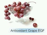 ต้านอนุมูลอิสระและปกป้องผิวด้วย โกรทแฟคเตอร์ จาก องุ่นแดง Red Grape Growth Factor -มีคุณสมบัติในการปกป้อง และซ่อมแซมผิวจากอันตรายของแสงแดด -ช่วยต่อต้านแสงยูวี -ทำให้เซลล์แข็งแรงมากยิ่งขึ้น -ปกป้องผิวจากการรบกวนจากสิ่งแวดล้อมที่อาจก่อให้เกิดอาการอักเสบของผิว -ทำให้เซลล์กลับมาทำงานได้อย่างมีประสิทธิภาพมากยิ่งขึ้น